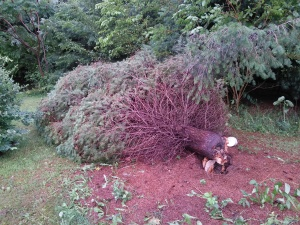 Uprooted (well, almost - but bear with me!)